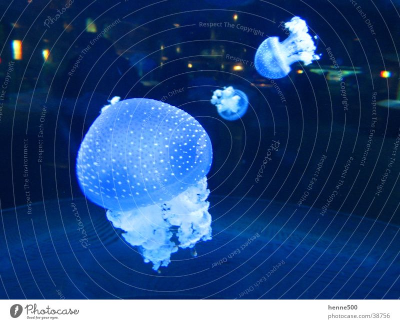 Luminous jellyfish Jellyfish Aquarium Animal Light Ocean Water