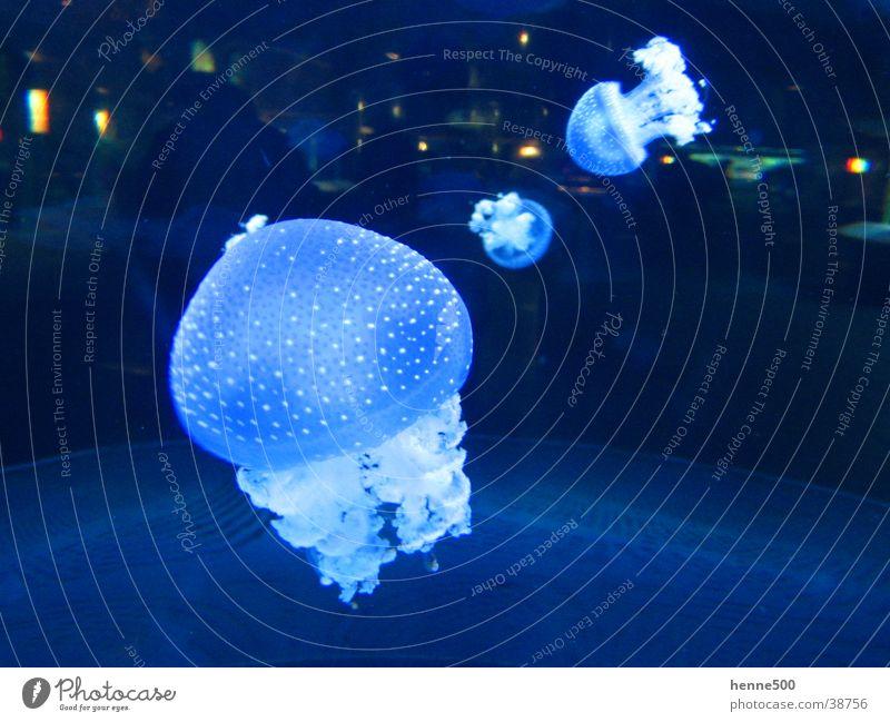 Water Ocean Animal Aquarium Jellyfish