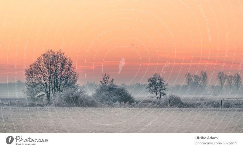 Winter landscape Teufelsmoor near Worpswede / Bremen in the wonderful sunrise Fog Germany Osterholz-Scharmbeck devil's mire Hoar frost Calm White Sky Clouds
