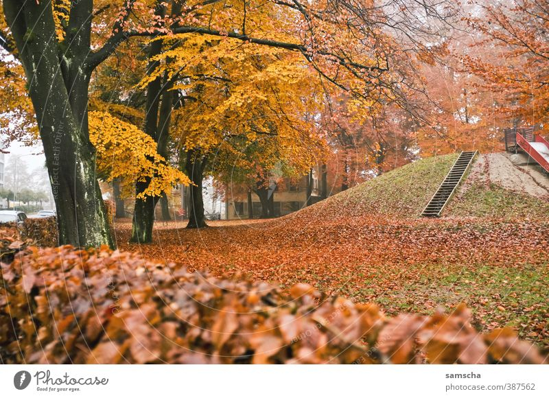 Nature Plant Tree Leaf Yellow Environment Cold Autumn Park Fog Seasons End Tree trunk Autumn leaves Autumnal Playground