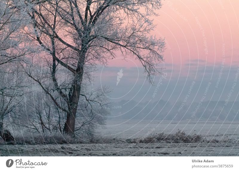 Snow landscape - tree covered with hoarfrost at sunrise Harmonious Meditation Vacation & Travel Tourism Winter Freedom Winter vacation Christmas & Advent