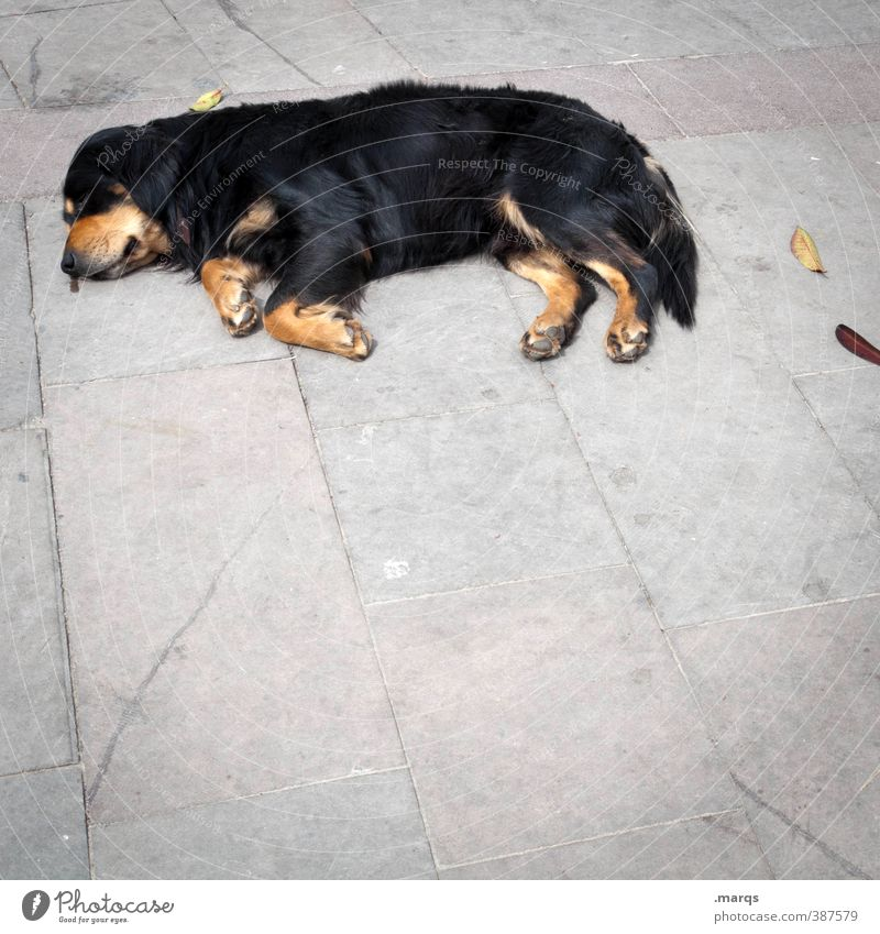 Lazy dog Animal Pet Dog 1 Relaxation Lie Sleep Simple Fatigue Exhaustion Indifferent Comfortable Floor covering Colour photo Exterior shot Deserted