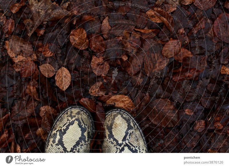 Shoes in wet autumn leaves. Autumn foliage Wet Footwear Fashion Snakeskin Autumnal Autumnal colours Ground Nature Season Transience Brown Pattern trend