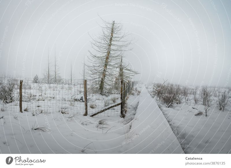 Snowy landscape in a high moor on a foggy morning Winter Landscape Environment Fog Horizon Bad weather Frost paths and paths High venn Plant Tree Bushes Spruce
