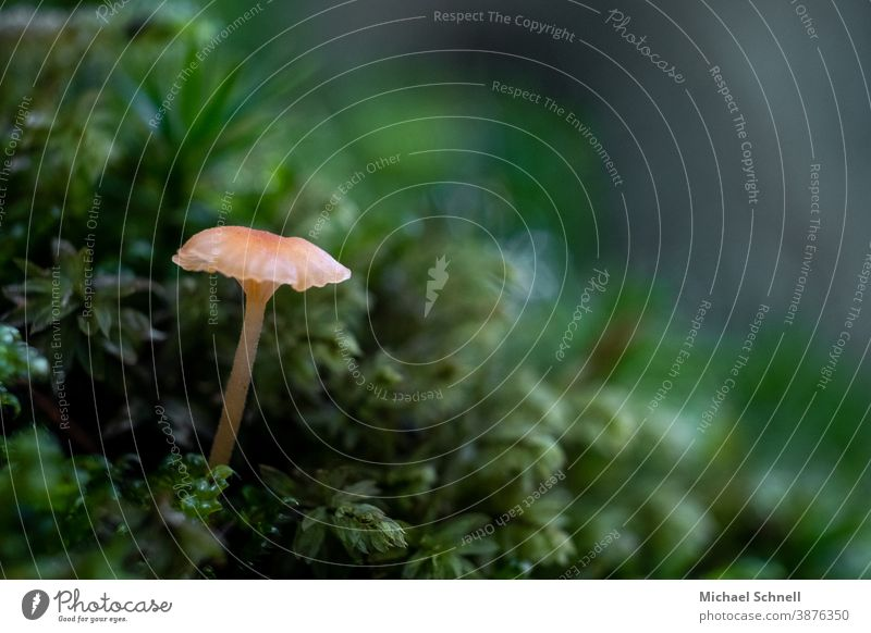 Very small mushroom in the forest Small Mushroom Macro (Extreme close-up) Nature Colour photo Autumn Plant Growth Green Shallow depth of field Deserted