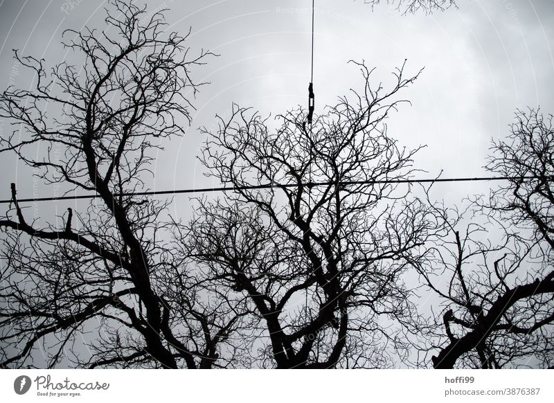 Overhead line in front of tree structure and grey gloomy sky branches bare trees Fog Branch Wet Tree Bad weather Twig Gloomy Twigs and branches Rain Weather