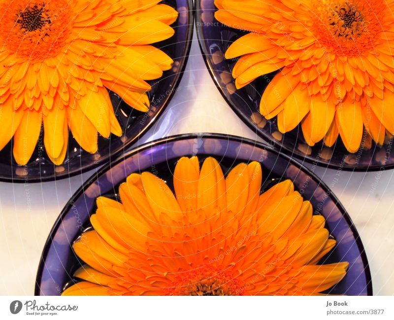 Blue Yellow IIII cutouts Flower Sunflower Bowl blue bowl Water Partially visible Cut