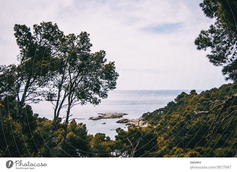 Landscape with views of the sea and some vegetation costa brava calella de palafrugell palamós landscape water rocks mediterranean catalonia nature natural