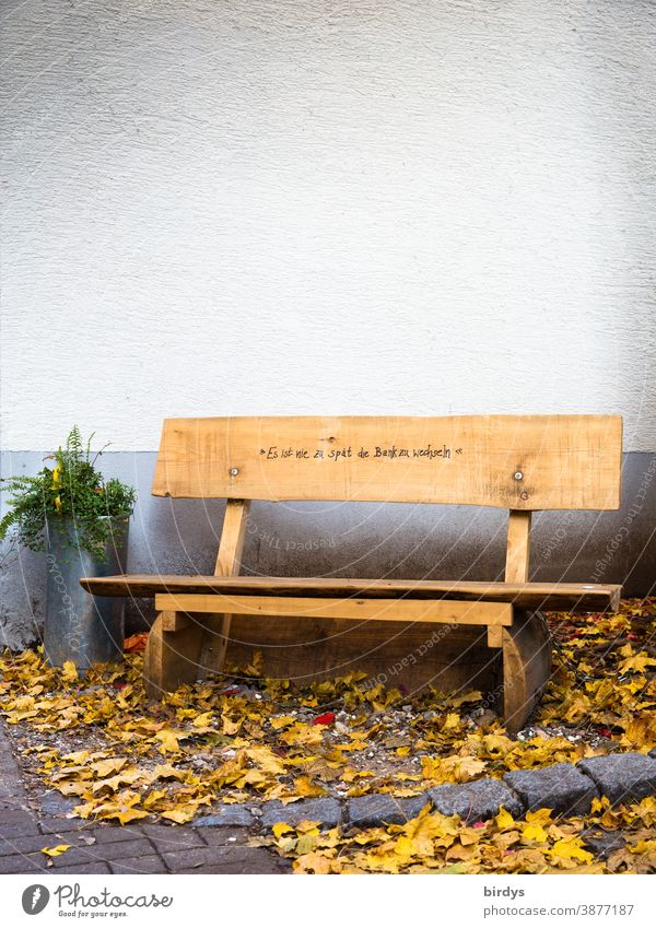 """public wooden bench, seat with the inscription """"it is too late to change the bench """" ambiguity Bench Wooden bench Public Seating Characters Humor Autumn leaves"""