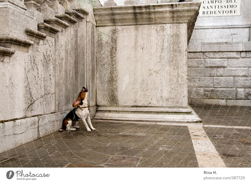 Dog Animal Wall (building) Sadness Wall (barrier) Sit Wait Corner Longing Cry Paving stone Dog lead Impatience Leashed