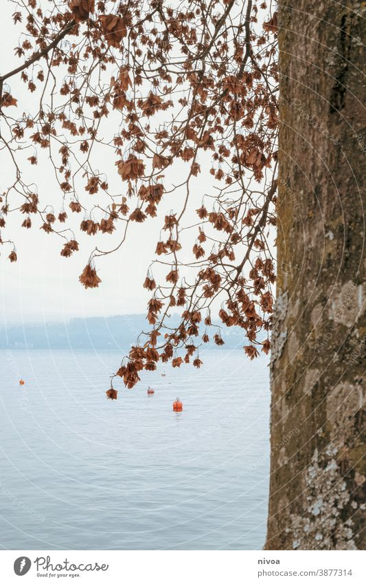 Lake Zurich in autumn zurichsee Autumn Tree trunk bark leaves branches Buoy Environment Twigs and branches Green Nature Forest Deserted Plant Leaf Exterior shot
