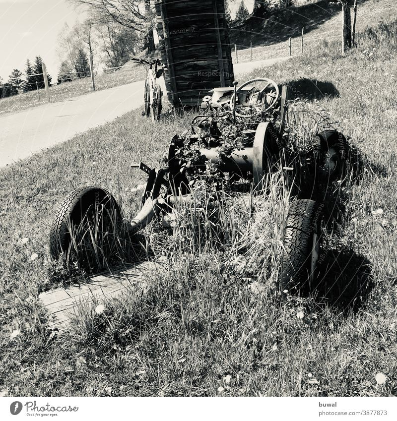 Car wreck in a meadow overgrown by plants along the road car Vehicle Car tire Steering wheel Engine parts Tire Wrecked car Car components Bicycle Tree trunk