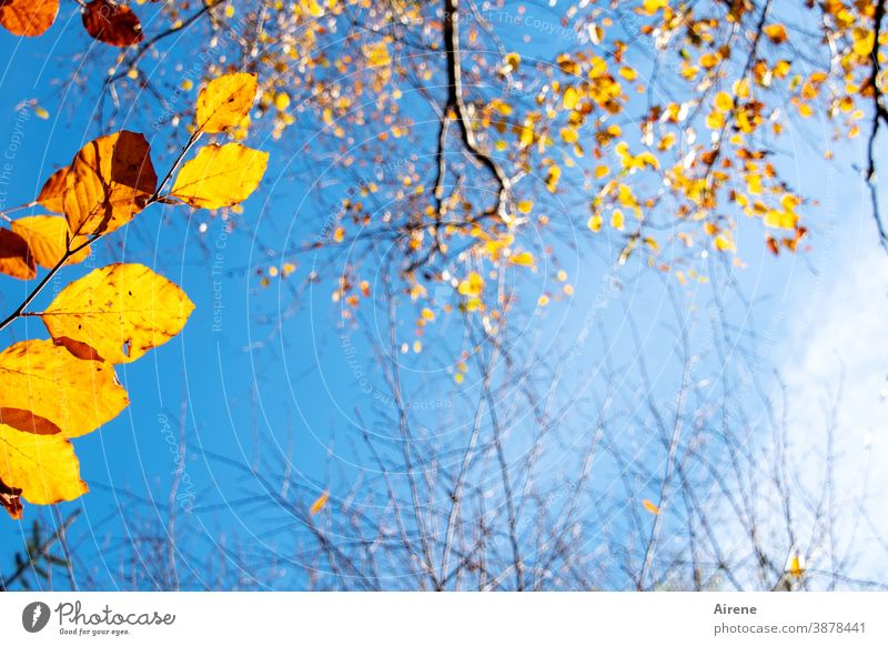 before the last leaves fall Tree Illuminate Colour Orange Gold Sky Sunlight Autumn Autumn leaves Deserted Autumnal Nature Autumnal colours autumn mood
