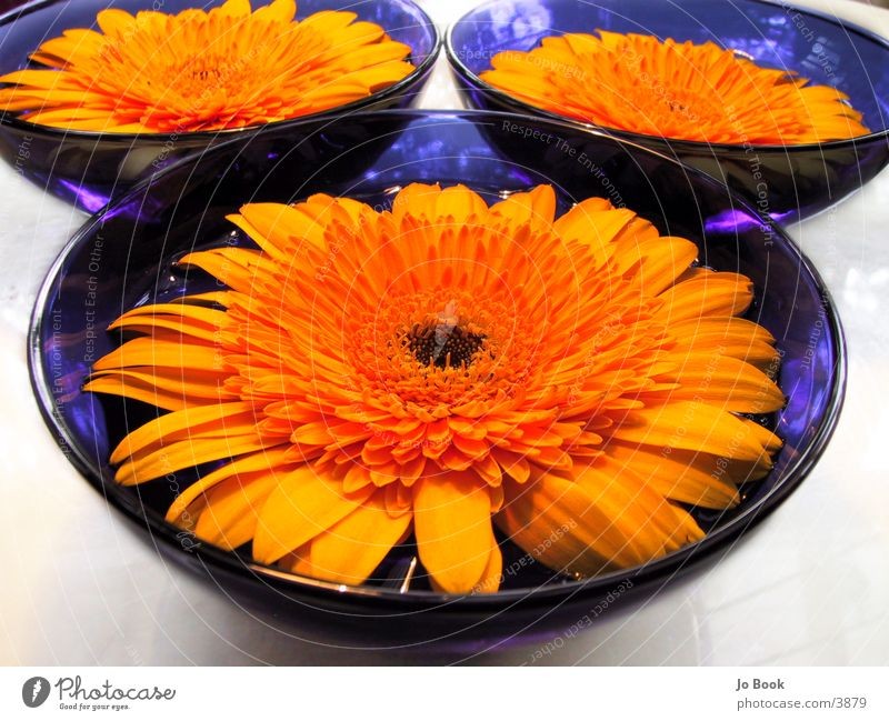 Blue Yellow Perspectives II Flower Sunflower Bowl blue bowl Water