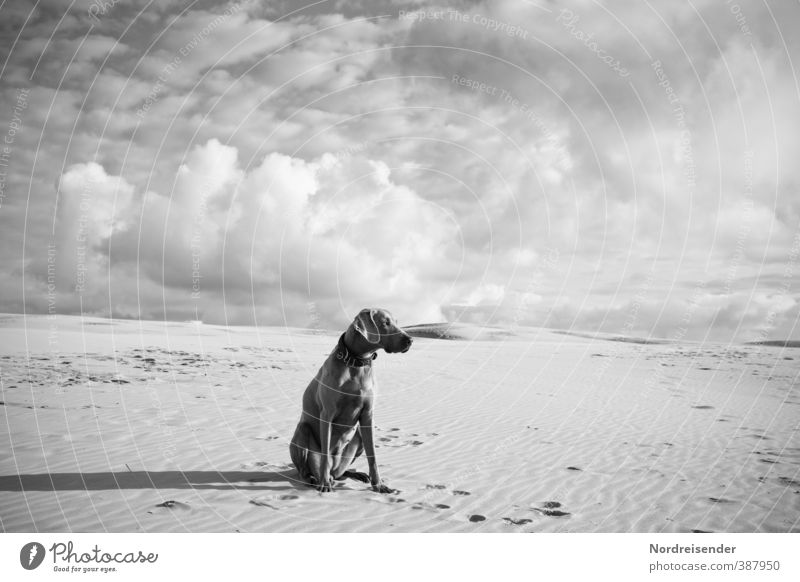 Dog Sky Loneliness Clouds Animal Far-off places Freedom Sand Sit Climate Esthetic Observe Friendliness Adventure Curiosity Desert