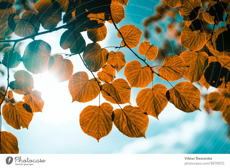 Yellow leaves on the background of the sun in the sky flower design abstract tree frame border summer texture nature leaf spring light park golden forest autumn
