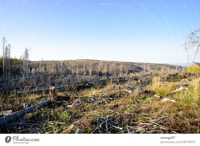 dead | the triumph of the bark beetle topic day Triumph Bark-beetle Forest death dead forest Tree Nature Climate change Log Environment Forestry Deserted