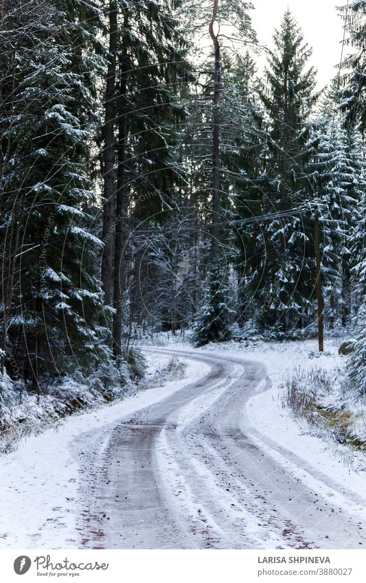 Snowy road in winter forest. Beautiful frosty white landscape. snowy season ice scene christmas tree day car freeze outdoor background weather light woods park