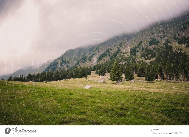 Hiking on the Alm | view of a mountain in the Alps | cloudy and foggy up there Alpine pasture Meadow high up mountains mountainous Mountain meadow Valley
