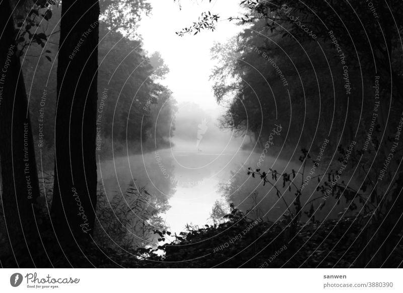 Fishing Lake Fishing (Angle) Fog swans Swan animals Water Nature Bird Landscape somber Morning morning air Morning fog Deserted
