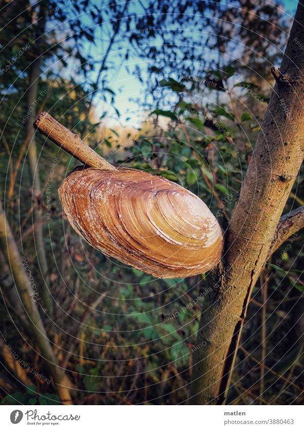 very large pond mussel resting on branch Tree shell Sky woody Branch Exterior shot Deserted Beautiful weather Leaf Day Autumn Sunlight Cloudless sky