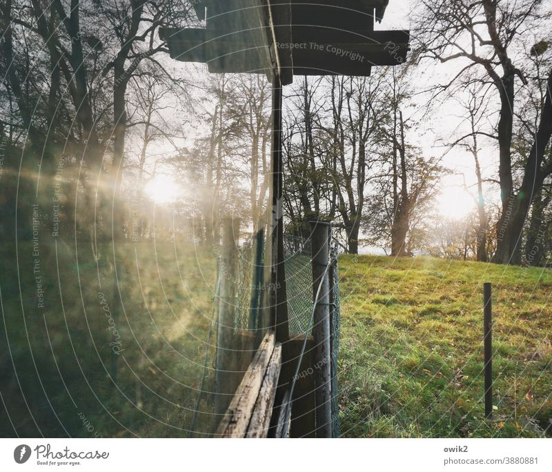Getting late cot Window Garden Flake Glass reflection trees Meadow Grass Sun Sunlight Evening Fence post Nature Colour photo Reflection Exterior shot Deserted