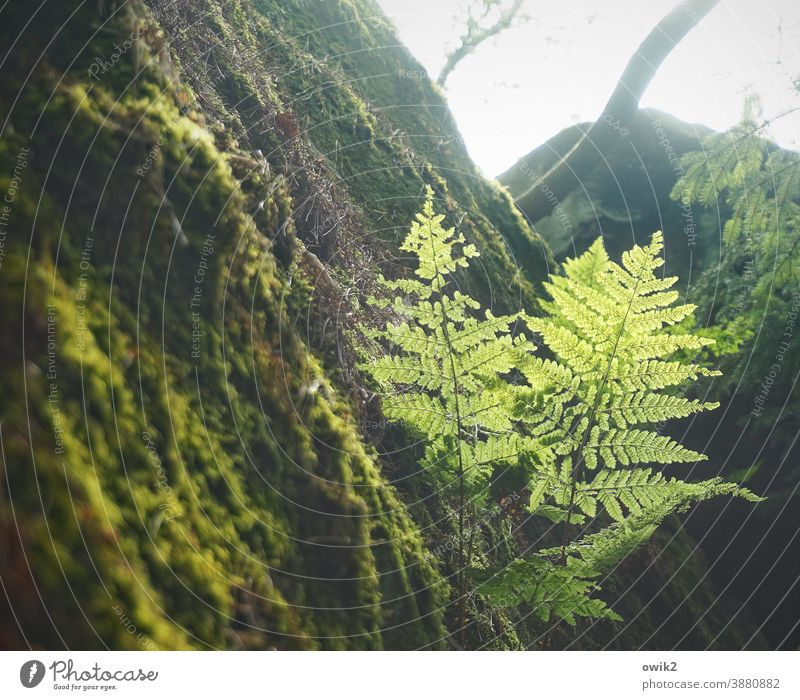 Stone Crusher Pteridopsida Plant Bushes Beautiful weather Growth Forest Clearing Peaceful Green Tree Edge of the forest Calm Idyll Structures and shapes