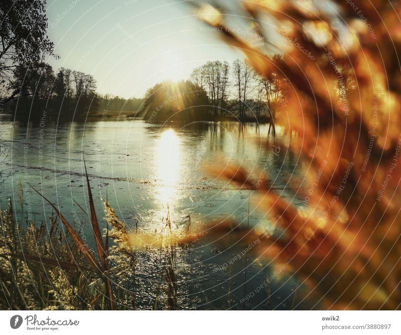 ossified Lakeside Island Pond Illuminate Calm Longing Loneliness Idyll Horizon Beautiful weather Cloudless sky Water Air Plant Landscape Environment Mystery