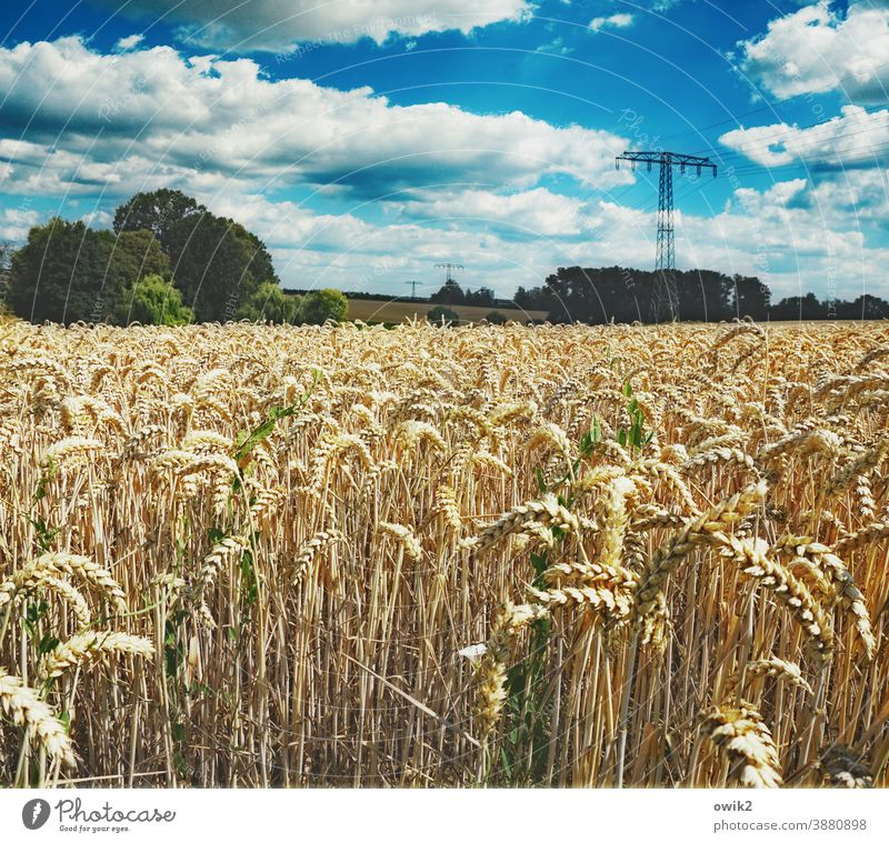 Honorary Environment Nature Landscape Sky Clouds Beautiful weather Climate Summer Horizon Warmth Plant Tree Field Wait Grain field Cornfield Idyll