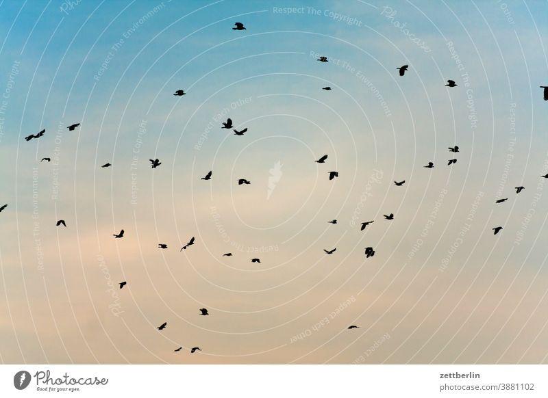 Flying birds Judder Sky crow Seagull Flock Bird Flock of birds Migratory bird Crow Blackbird Starling flock of birds cloud