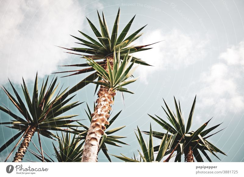 palm Palm frond Palm tree Plant Nature Colour photo Green Exterior shot Leaf Deserted Exotic Day Summer Tree Vacation & Travel Environment Beautiful weather