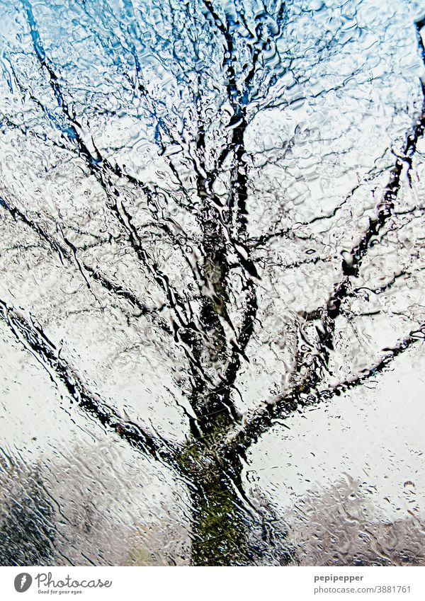 Tree in the rain photographed from inside through a car window Rain Slice Car Window Window pane Drops of water Weather Water Wet Bad weather Deserted