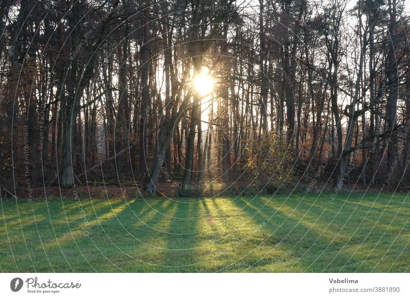 Edge of the forest against the light trees Back-light Tree Row of trees Landscape Nature Sun sunbeam Sunbeam Meadow