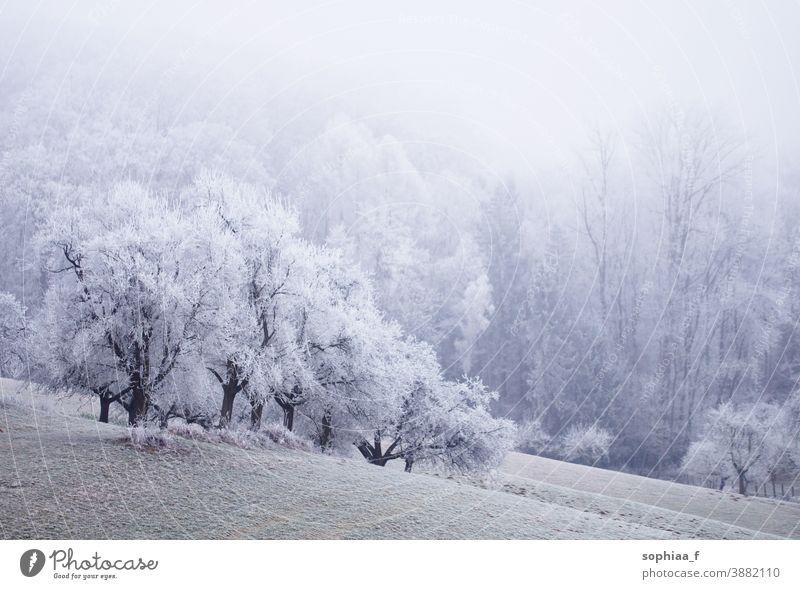 foggy winter wonderland, frozen field with trees frozen landscape winter scene snowfall foggy morning cold idyllic winter forest wood beautiful nature frosty