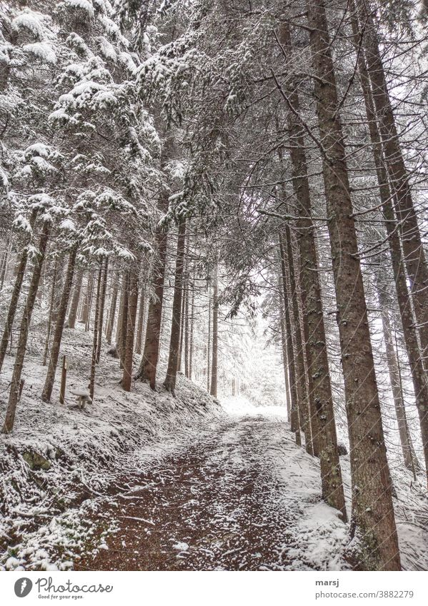 Winter walk through the spruce forest Promenade Hiking trails Snow winter Winter magic Winter mood Cold Winter's day Nature