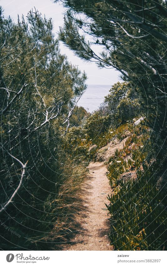 A narrow footpath surrounded by green vegetation with the sea on the background costa brava calella de palafrugell palamós water mediterranean remoteness