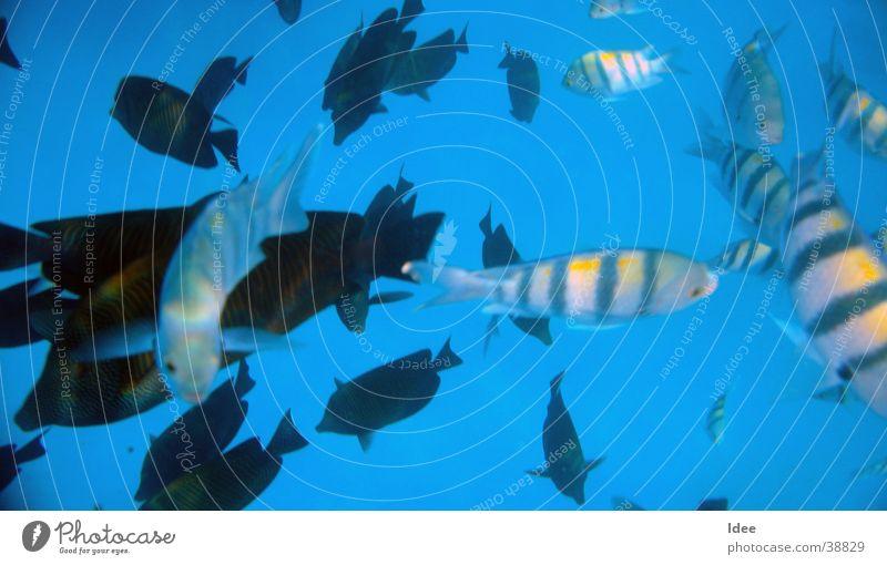 Water Transport Fish Dive Snorkeling