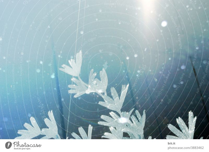 Icy-looking flowers, in a snow flurry, against a diffuse blue background. Ice Frostwork icily chill Flower Blossom Blossoming blossom Snow pretty Winter Blue