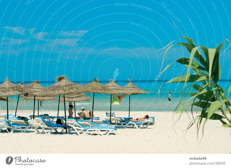 DreamBeach Sunshade Beige Palm tree Human being Moral Sand Water Sky Relaxation