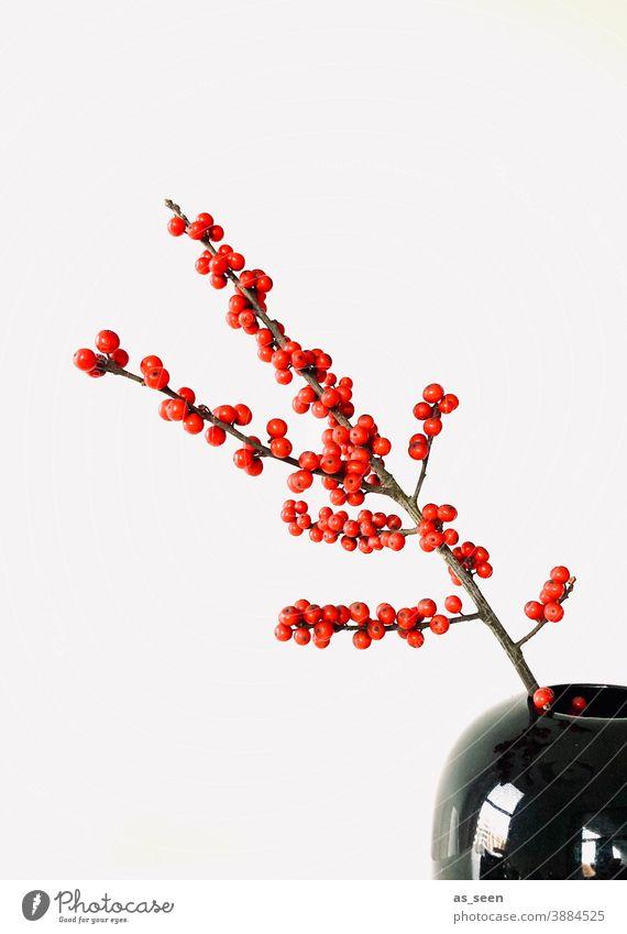 Ilex Branch Twig Red Black Glittering Berries Decoration Floristry Japan Japanese Minimalistic Copy Space left Plant Colour photo Nature Winter Interior shot