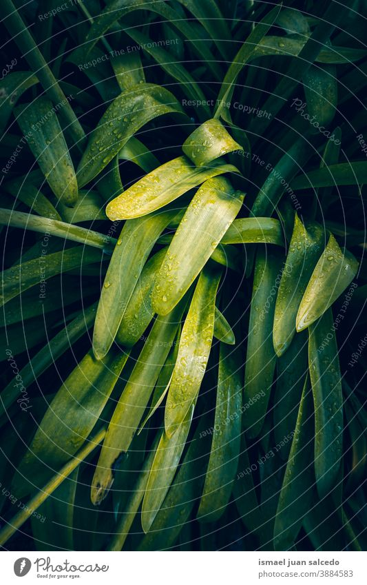 green plant leaves in the nature, green background leaf garden floral natural foliage decorative decoration abstract textured freshness outdoors beauty