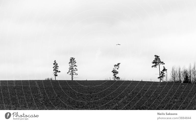 landscape with lonely trees and flying bird Animal atmosphere autumn avian background beautiful biology black branch branches clouds color country creepy