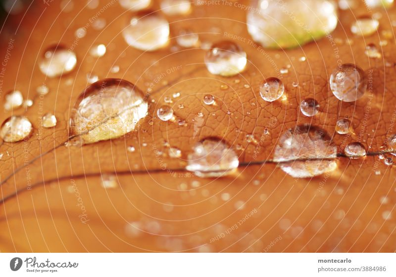 back to the roots | nature wafer-thin tautropepfe splendour Delicate dew drops Exterior shot Round Near Environment Nature Thin Water Plant Fluid Fresh