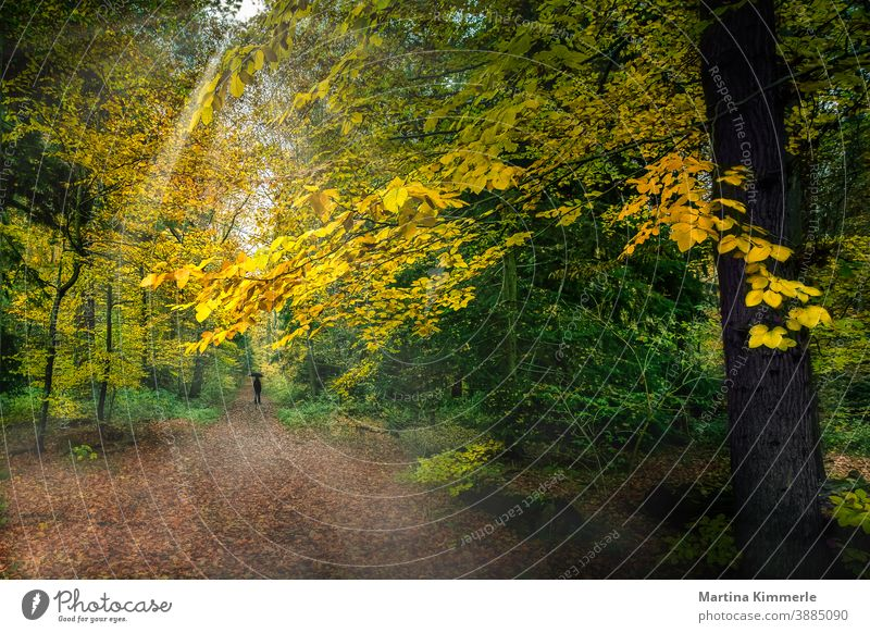 Autumn forest with a person in black with a black umbrella Forest Branch foliage colourful flora Grass Landscape Leaf leaves Haze naturally Outdoors Park Plant