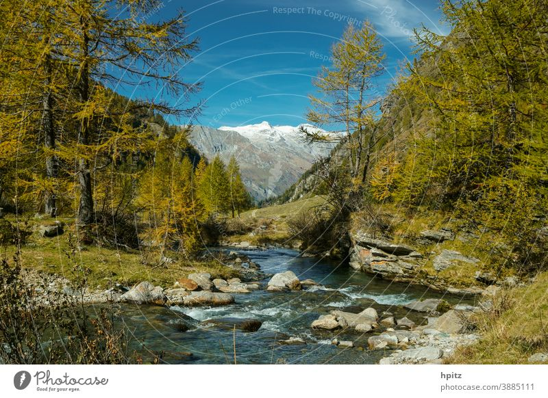 ...and again autumn in the high mountains Brook Autumn Mountain forest Nature Colour photo Forest Alps Water Beautiful weather Hiking