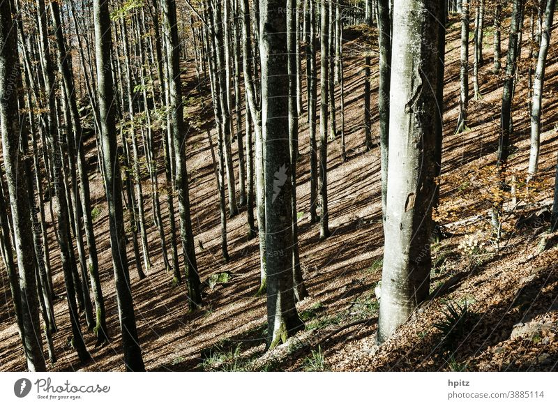 ..and again autumn in the low mountain range Autumn Tree trees Forest Nature Autumn leaves Exterior shot Sunlight Autumnal colours Automn wood