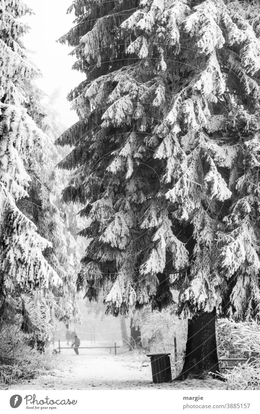 Deeply snow-covered forest, a huge fir tree, spruce on a closed path Snow off Forest Winter Tree Ice snowy Freeze Ice age Cold Uniqueness Plant Snowfall Frost