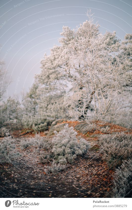 #A0# Hiking in Saxon Switzerland at the onset of winter Freeze Landscape December Weather Environment Climate Snow Frost Cold Nature chill Winter light
