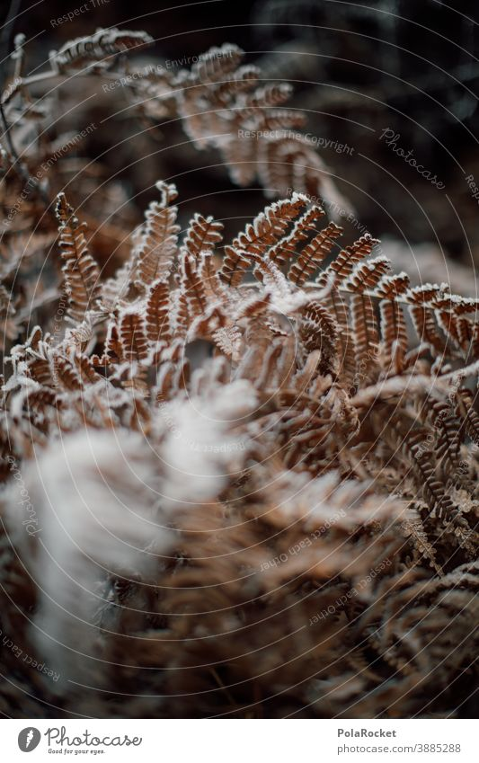 #A0# Fern frozen Fern leaf ferns Farnsheets fern growth fern drive fern stalk fern branch fern. frozen Frozen frozen leaf frozen ground Winter onset of winter
