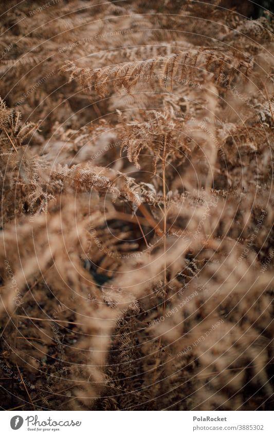 #A0# Fern in autumn Fern leaf ferns Farnsheets fern growth fern drive fern stalk fern branch Nature Autumn Autumnal Early fall Woodground Ground Dry Shriveled